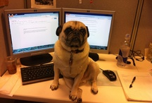 Pug of the Week / by Louie-Abbie Rothschild
