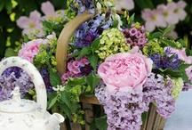 Gardens, Landscaping, Etc....