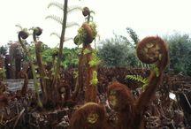 Plant Picures