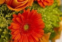 Flowers!! / by Ligia Denice Chinchilla