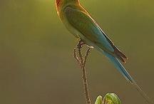 birds / by Jan Ward