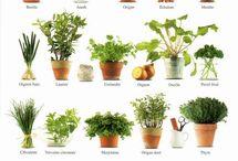 Gardening / horta, jardinagem e afins
