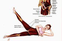 workout anatomy