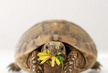 Turtles / by Deborah Rieger