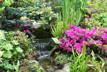 Jardin bassins et cascades