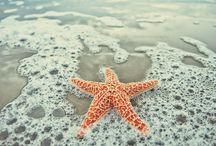 Beautiful beach / by Tiffany Hummel