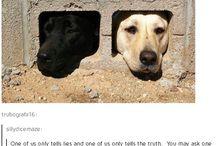 anjing bingung.