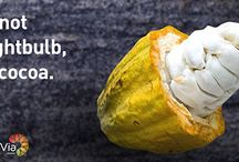 It's Cocoa! / Do you know what a cocoa pod looks like? Many people have never seen or know what the cocoa fruit looks like. (Yes cocoa is a fruit!). The images you'll see on this board are all of real cocoa pods. Enjoy!