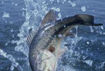 Na rybki