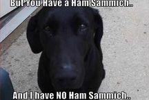 Lol animal memes