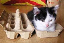 here, kitty, kitty, kitty