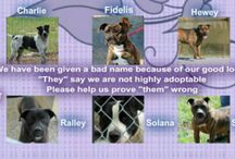 Adoptable dogs in TN / by Nancy McGinn