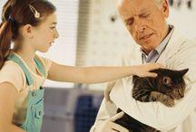 tratar gato