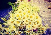 agaç çiçek börtü böcek