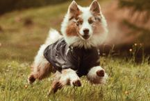 Dogs / Clothing and accessories for the beloved pet in your life! / by High Camp Home (HCH)