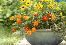Landscaping Ideas / by Amy Livengood