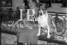 Dog Shows / Dublin Dog Shows in the 1950's!