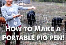 Permaculture / Everything Permaculture, Homesteading, Farming, Animal Husbandry