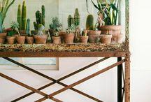 DESIGN3 - garden indoor