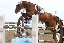 Show Jumping / Show jumping