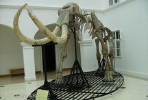 Gyöngyös (múzeum)