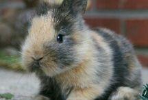 Lapin / Le lapin le plus mignon du monde