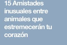 AMISTADES ENTRE ANIMALES