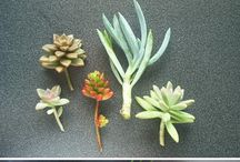 Planter inne og ute