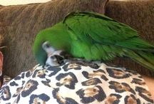 Vegas & Blackjack / Things we love for our 2 parrots ❤️