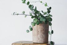Plant Wishlist