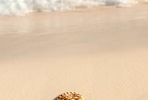 Beaches,shells