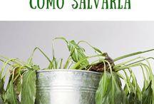 Como saber si una planta está muerta