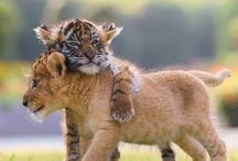 cute και ωραίες εικόνες με ζωάκια
