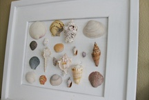 Seashells, displaying & craft