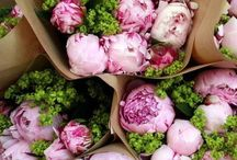 I will have a garden full of nothing but these one day / Peonies, peonies and more and more peonies. / by Courtney Richter