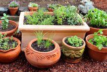 Jardinagem (Gardening)