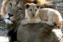 Baby animals - Felines / by Ryn Tomas
