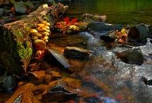 4 seasons-Autumn