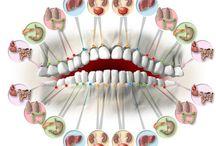 Zuby body