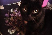 PERLINA / La mia gatta nera