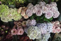 shop / 店内のディスプレイや入荷した花やアイテムなど