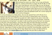 Mitsu - Adopted! / Female - Red - 3 Years Old - Special Medical Needs - Follow her story here: http://on.fb.me/1UGCVzd