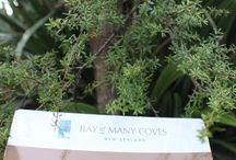 Native Plants / New Zealand's Native trees and shrubs