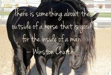 paardren quots
