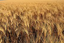 Prairie / My heart's home.
