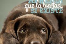 carteles de perros