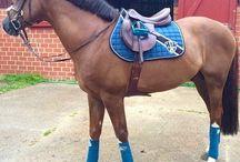 Everything horsey ❤