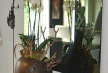 Onze orchideeën