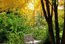Garden Fragrance