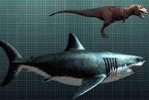 Megaladons / Big scary sharks